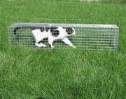 Котоловка. Клетка для отлова котов и кошек. Живоловка безопасная. Кот